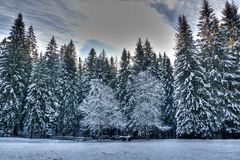 Forests are snow-covered ornaments in beautifull day. Winter and snow come to the mountains for skiing and fun Royalty Free Stock Photography