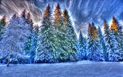 Forests are snow-covered ornaments in beautifull day Royalty Free Stock Photo