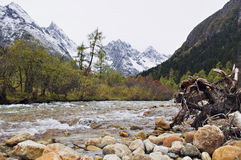Forests and snowcapped mountains in Sichuan creek Stock Image