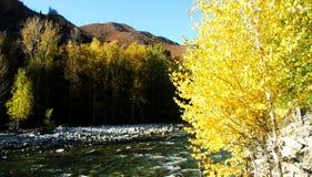 Forests,  streams and meadows. A stream flows through the golden mountains.  zhaofuxin Stock Photos