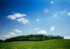 Forests in the summer landscape. Illustrations,summer forest stock photos
