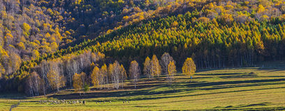 Forests in sunset, Xingcheng city, China Royalty Free Stock Image