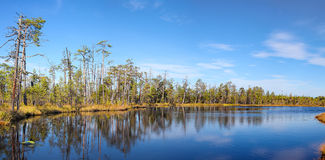 Forests tranquil lake and evergreen trees Stock Image