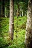 A Forests View Royalty Free Stock Photography