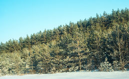 Forests Royalty Free Stock Photo