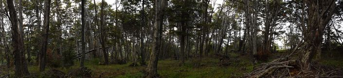 Forests of the world south. Panoramic view of the forests of the south of the world. Patagonia, Chile stock image
