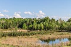 Forestsee, grüne Bäume, trockene Schilfe Stockfotografie