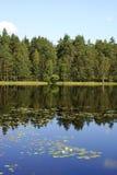Forestsee-Reflexionen Stockbild