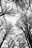 forestshadows υψηλός επάνω στοκ εικόνες με δικαίωμα ελεύθερης χρήσης
