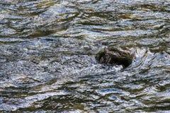 ForestStone verde in acqua immagine stock