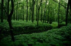 ForestStream1 Fotografie Stock