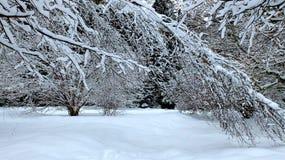 ForestTrees del invierno en nieve fotografía de archivo libre de regalías