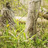 Forestview Imagens de Stock Royalty Free