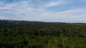 Forestview Zdjęcie Royalty Free