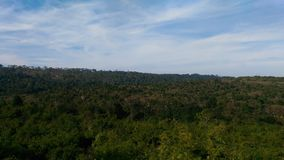Forestview Foto de Stock Royalty Free