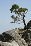 Foret de Marghese, Korsika Stockbild