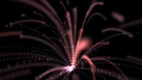 Forever Firework Abstract Animation Royalty Free Stock Image