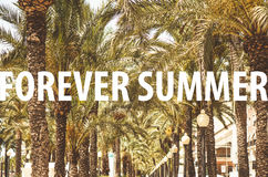 Forever summer title in front of palm tree alley Stock Photo