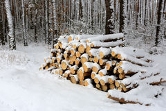 Forewood lager i skog Arkivbilder