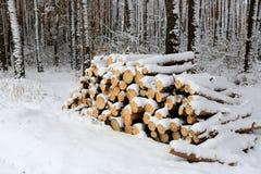 Forewoodopslag in bos Stock Afbeeldingen