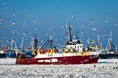 Forezen boat with birds entering in harbor. Forezen boat with seagull entering in harbor Stock Photography