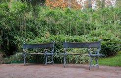 Forged ławka w egzotycznym parku Fotografia Stock