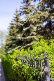 Forged grill fence and ate growing behind her in Novosibirsk, Russia stock photos