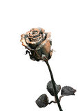 Forged metal rose. Isolated on the white Royalty Free Stock Photography