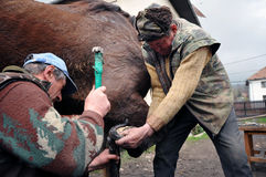Forgeron chaussant un cheval Photographie stock libre de droits