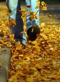 Forget grief. The man goes on yellow foliage Stock Image