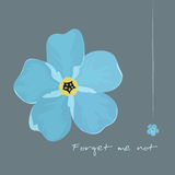 Forget-me Blue Flower  Stock Images