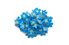 Forget-me-flower Stock Photos
