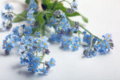 Forget-me-on glass Royalty Free Stock Photo