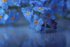 Forget-me-on glass Royalty Free Stock Image