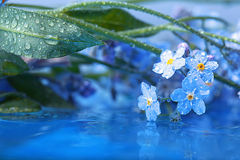 Forget-me-on glass Stock Images