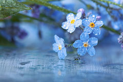 Forget-me-on glass, wet flowers Royalty Free Stock Photography