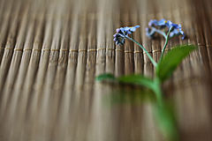 Forget-me-on glass, wet flowers Royalty Free Stock Images