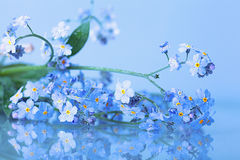 Forget-me-on glass wet Royalty Free Stock Image