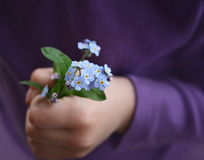 Forget me not Royalty Free Stock Images