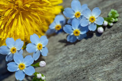 Forget-me-not. In macro shot Royalty Free Stock Images