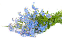 Forget-me-not. Lovely spring flowers - forget-me-not bouquet stock image
