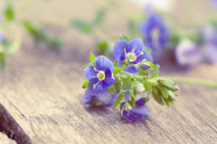 Forget-me-not. Flowers of forget-me-not on wooden background Stock Photos