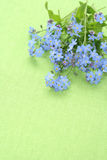 Forget-me-not Stock Photography