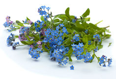 Forget-me-not. Beautiful bouquet of pink and blue colours isolated on  white background Royalty Free Stock Photography