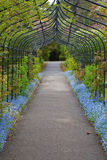 Forget-Me-Not Arch. A black metal archway lined with forget-me-nots & rose bushes Royalty Free Stock Photo