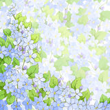 Forget me not background Royalty Free Stock Image