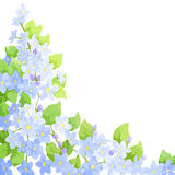 Forget me not background Stock Photos