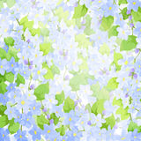 Forget me not background Royalty Free Stock Photos