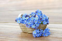 Forget me not in the basket Royalty Free Stock Image