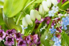 Forget-me-not, bergenia, polygonatum plants Stock Image